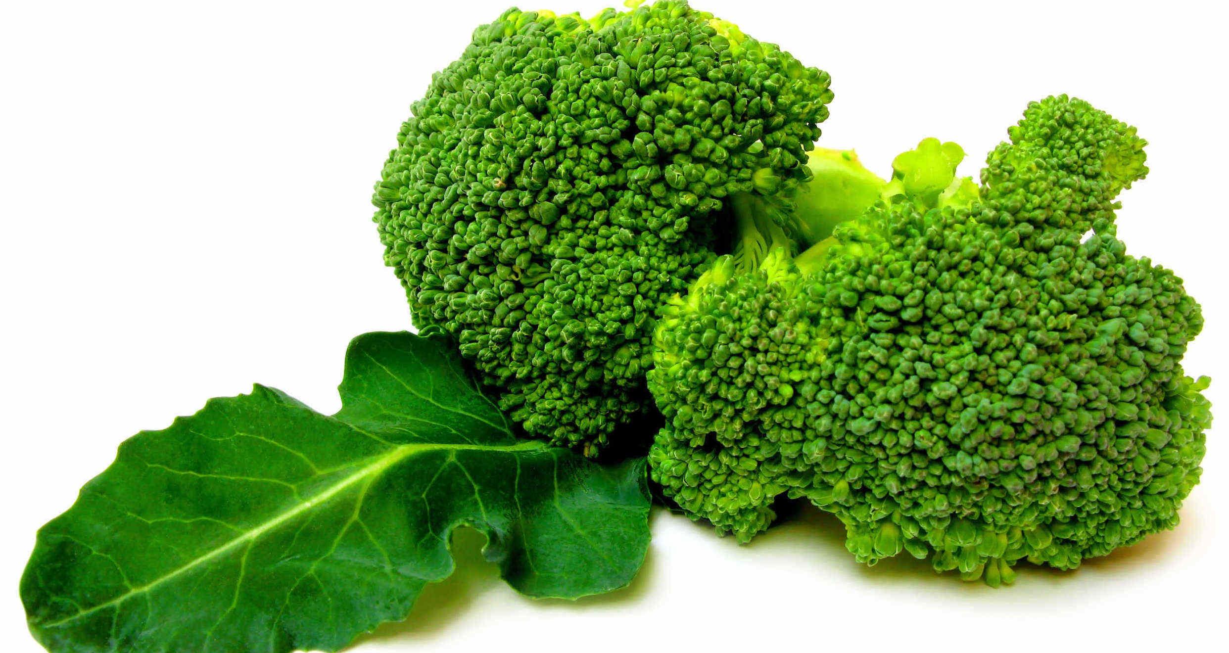 Imagen en color de dos tallos de brócoli con una hoja grande verde, en un fondo blanco